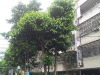 云浦花园3室2厅2卫住家装修证件齐全手续清晰