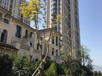 海德公园89平精装218万,装修花了56万 景观房七小公立校区证满2年