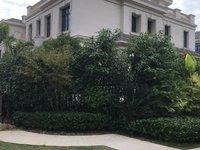 出售海德公园边套排屋380平999万三面大花园前后无遮挡