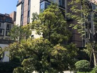 出售中梁叠墅三面大花园157平310万带车位送地下室