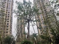 滨江花苑137平高层边套送车位卖1.1万实验学区